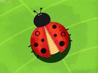 Ladybird..