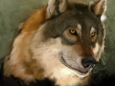 Wolf nature wolf painting fine art illustration
