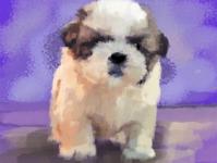 Pupper sketch autodesksketchbook puppy sketchbook illustration
