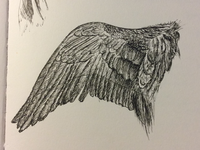 Dürer - Wings
