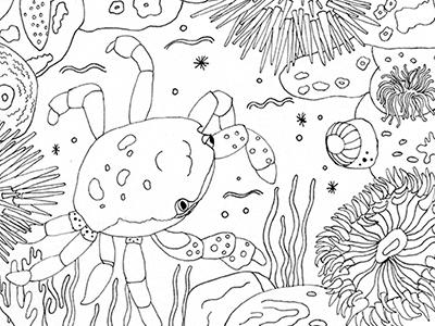 Crab tidepools ocean pnw coloring book illustration