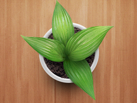 Plant for app homescreen