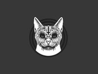 Cat 666