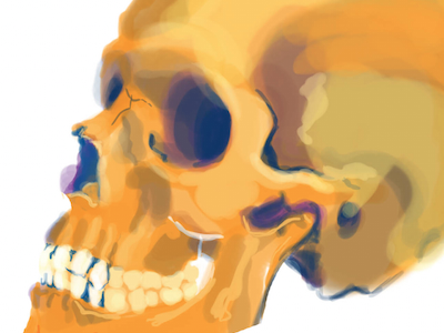 Skull Study skull life drawing digital painting photoshop anatomy bones