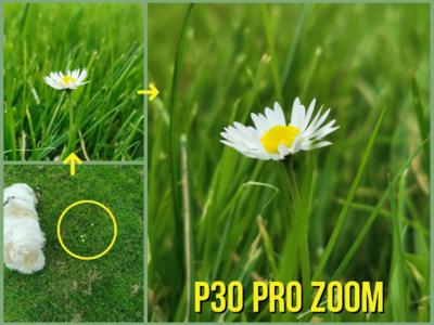 Phone Photography spark dublin garden flower flowers photography
