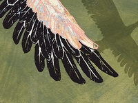 Feathers - WIP