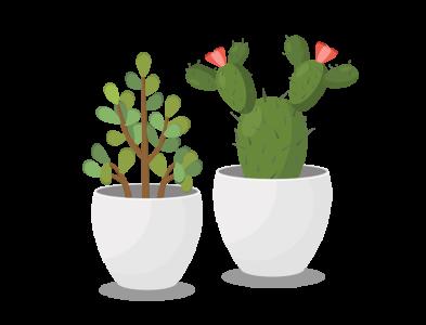 Succulents Duo designer artist decor home houseplants houseplant icon flat cute illustration design adobe vector illustrator lucky plant money tree plant art duo succulents