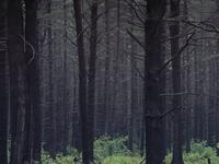 Moody Morning Woods