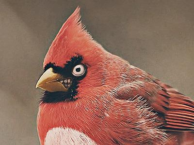 Real Life Angry Birds angry bird angry birds real