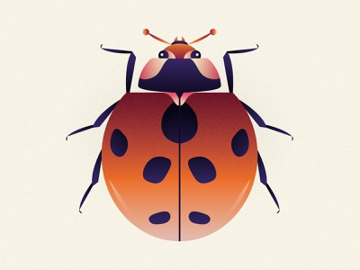 Coccinella Septempunctata leoalexandre leo alexandre ladybird ladybug coccinelle animal design illustration coleoptera wildlife vector nature minimal insects insect
