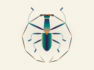 Gnoma Zonalis leoalexandre leo alexandre vector illustration design minimal wildlife nature animal illustrator horns horn longicorn coleoptera insects insect insecta