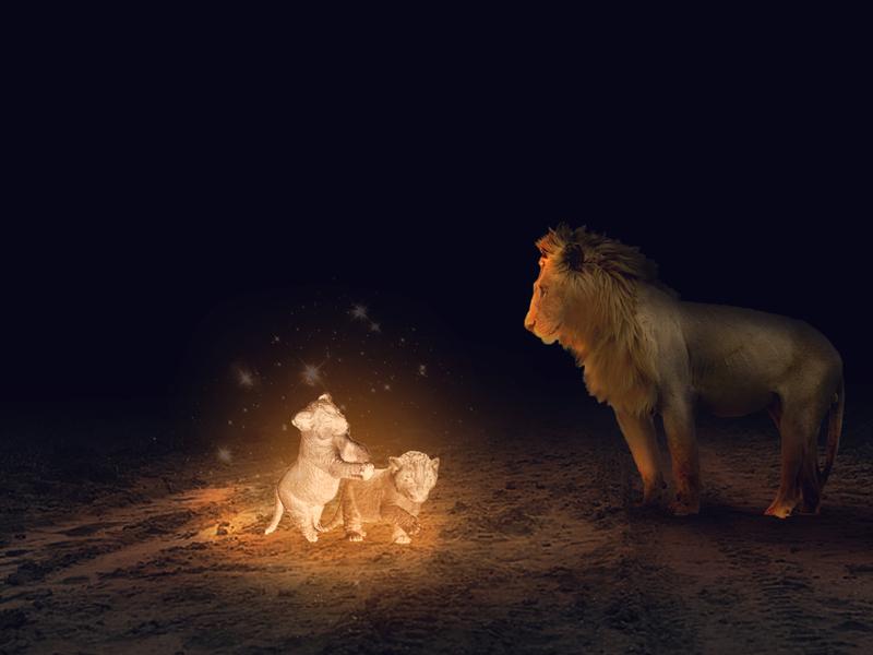 LION PHOTO MANIPULATION PHOTOSHOP . USED 4 IMAGES TO CREATE 1