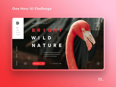 One Hour UI Challenge - 11. - Flamingo