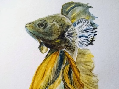 Betta Fish watercolor painting watercolor illustration