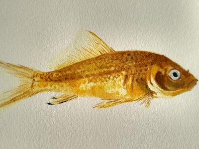 Golden Fish watercolor painting illustration watercolor