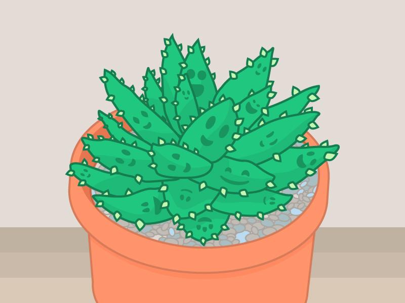 Succulent Family illustration succulent