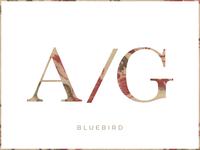 Authority Giants - Bluebird