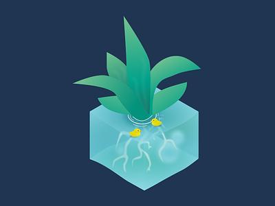 Plant digital ui illustration design succulent flow duck water plant isometric
