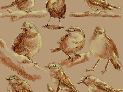 Robins robin bird drawing painting digital painting digital art illustration