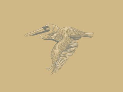 Bird #3 - Pelican