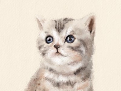 Kitty pets kitty drawing cat drawing cats animal portraits kitty cat animal
