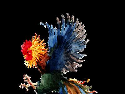 Đá gà trực tiếp thomo hôm nay mới nhất tructiepthomo dagatructiep