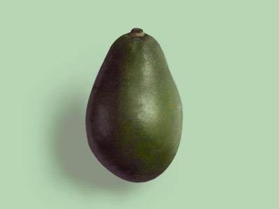 Avocado avocado illustration realistic