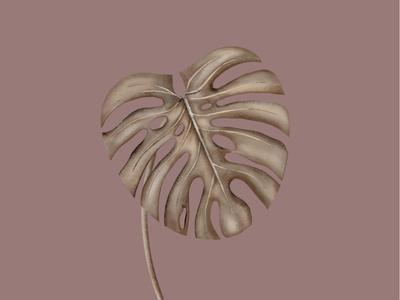 Monštra  plants