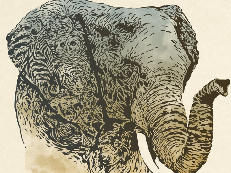Elephant zoo tiger bear hamerkop babirusa zebra mandrill macaw bald eagle african pygmy hedgehog barred owl elephant illustration animal oregon zoo