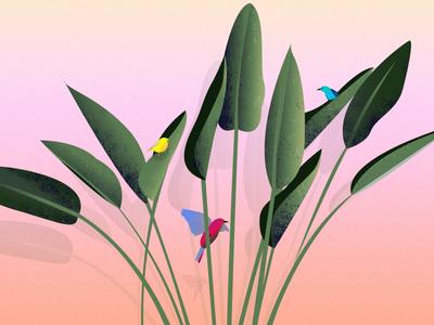 Birds illustrator summer editorial luxury coco color illustration grain green nature birds