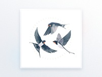 Swallows l Illustration