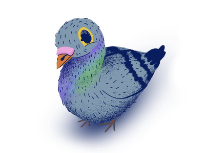pigeon from 365 days of drawing texture cute design bird print pigeon photoshop procreate art charcter design character illustration