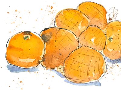 Oranges fruits oranges fooddrawing food illustration watercolor sketch illustration