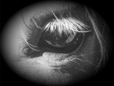 woudi eye eye equine photography photoshop