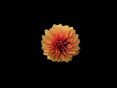 Beating Heart / Breathing Flower photography vector minimal illustration dribbble animation