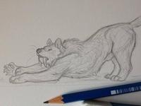 Smilodon sketch