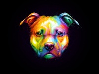 Pitbull Colorful
