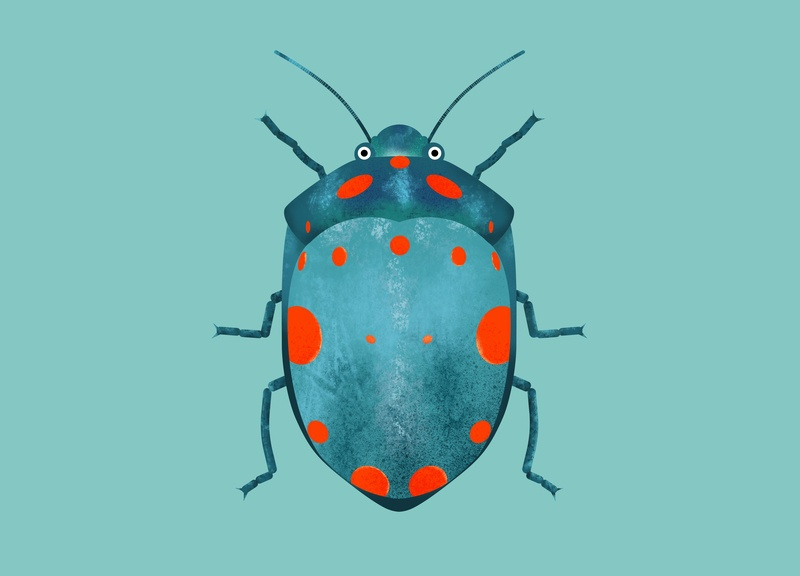 Insect Bettle illustrator texture procreate drawing sketch illustration bettle insect
