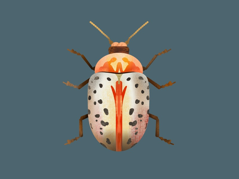 insect illustrator insect texture brush procreate drawing sketch illustration flat design