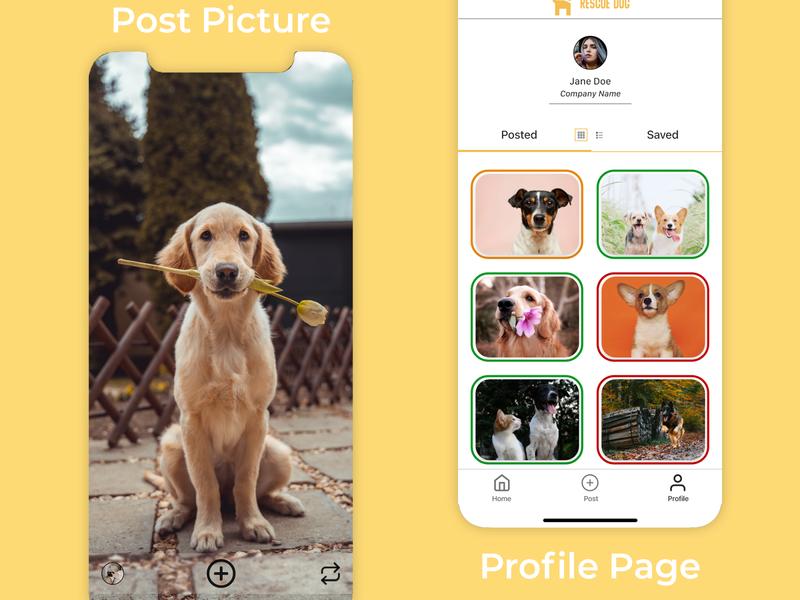 Rescue Pet branding ux design ui design rescue pets mobile app design design product ux ui
