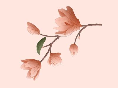 Flowers flowers print procreate sketchbook artists illustrations draw design artist art illustration