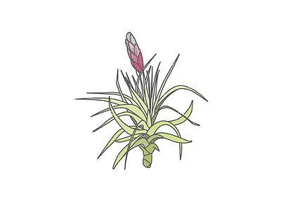 Tillansdsia Bloom line work floral flower botanical linework plant icon