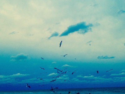Miami Seagulls photoshop wildlife seagulls color winter miami beach instagram photography sky photo portrait