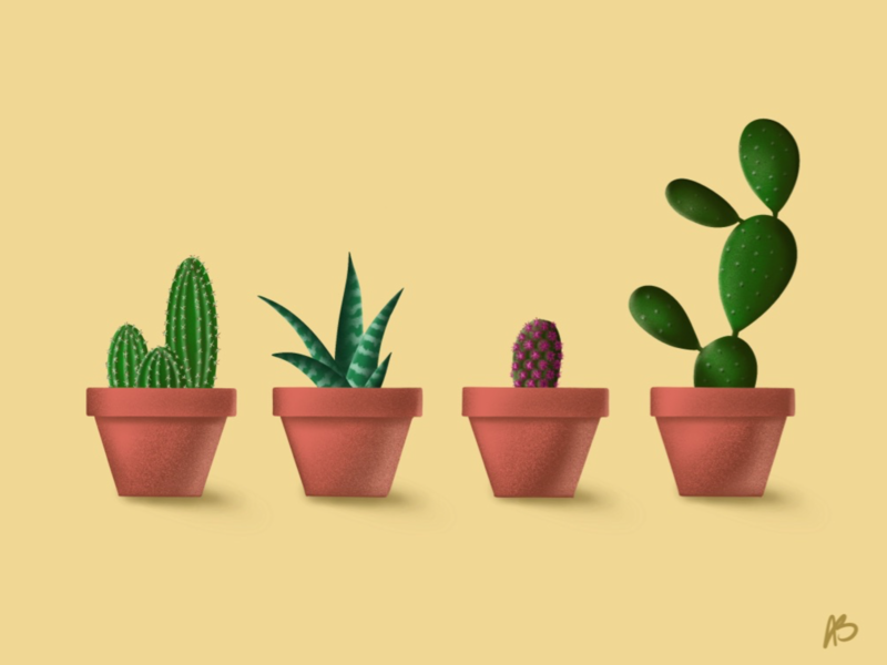 Succulents procreate succulents illustration design