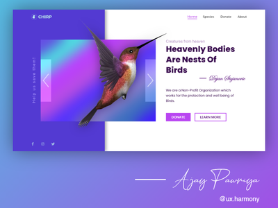 Bird website header section design adobexd header website design webdesign ux design ui