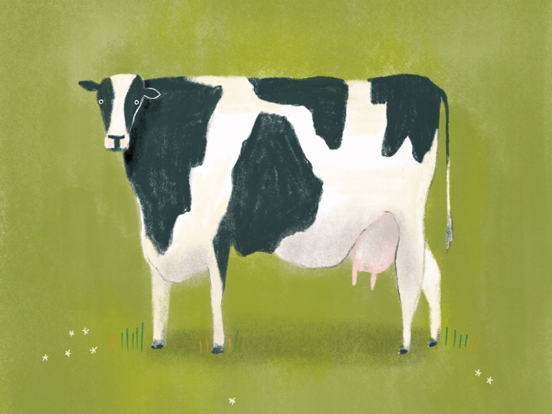 Cow procreate animal illustration cow illustration