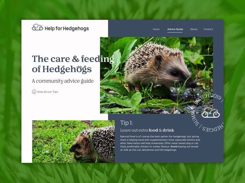 Help For Hedgehogs Advice Guide - UI Concept animal ui user interface design concept website concept website design branding branding and identity branding concept ux design ui design web design nature wildlife wildlife art typography icon design illustration hedgehog desktop design