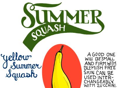 Summer Squash illustrated bites hand lettered illustration