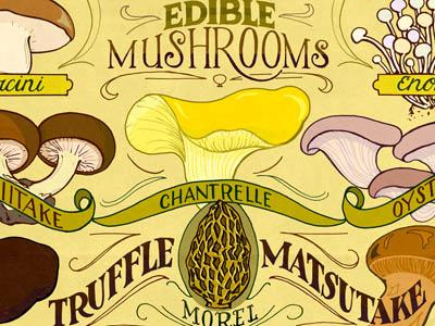 Edible Mushrooms hand lettering illustration typography food mushrooms