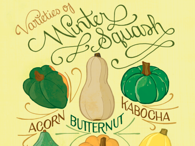 Winter Squash illustration typography hand lettering